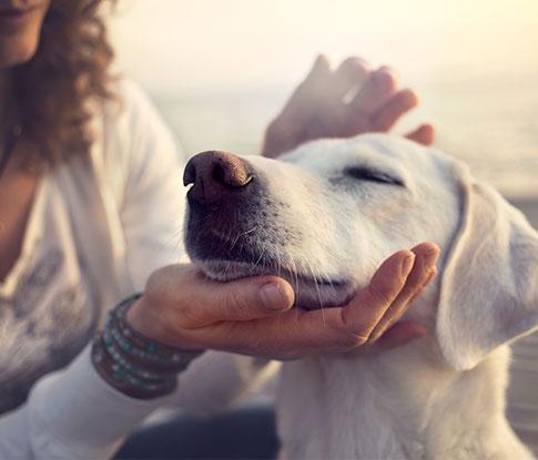 Association For Pets
